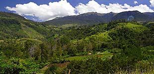 Дорога в Маунт Хаген, Папуа Новая Гвинея