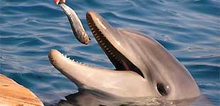 Дельфиний риф, Эйлат, Израиль