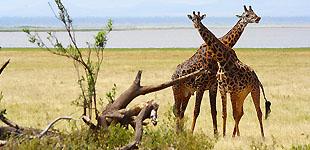 Африканская мечта детства. Часть 3. Нац. парк Маньяра