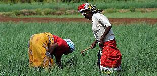 Луковое поле и баобабы, Танзания