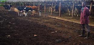 Плантация кофе, Танзания