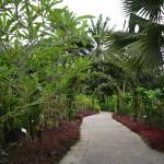 Ботанический сад в Сингапуре
