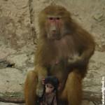 Зоопарк в Сингапуре фото