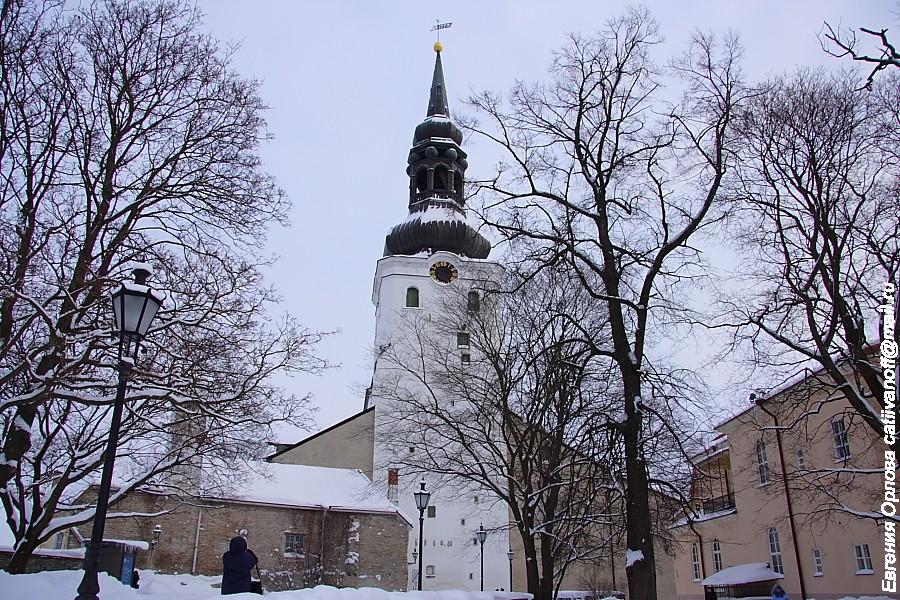 Домский собор фото