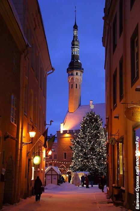 Таллинская ратуша фото