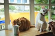 В Москве появилось первое кафе с котиками