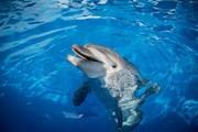 В Москве открывается дельфинарий под открытым небом