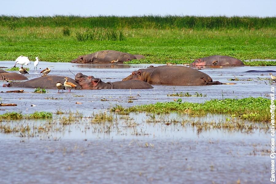 Танзания фото