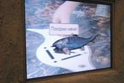 Интерактивный доисторический аквариум появился в Казани