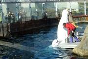 Майские праздники в Московском зоопарке будут интересными